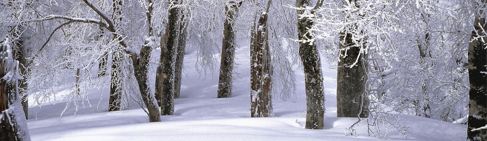 Feldberg - Skiing in Germany